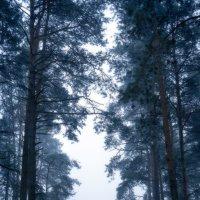 В море тумана... :: Roman Lunin