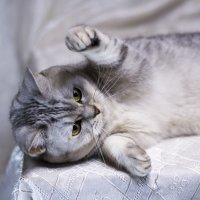 Не свети - спать хочу! :: Виктор Орехов