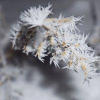 Инеем покрыты деревья и кусты,   кажется, не видела подобной красоты. :: Анна Приходько