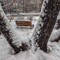 Скоро в парках зима. :: Василий Ярославцев