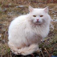 А вы шубы к зиме приготовили?:) :: Андрей Заломленков