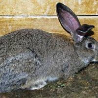 Кролик по имени Кус-Кус :: Alexandеr P