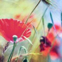Магический цветок. :: Лилия .