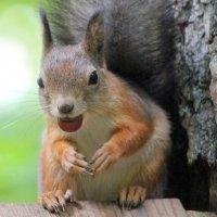 Смешная  с орешком :: Ната Волга