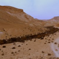 пустыня в Израиле. :: Пётр Беркун