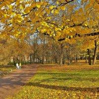 Золотая осень в Гатчине... :: Sergey Gordoff