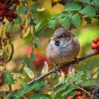 Короткая райская осень :: Владимир Шамота