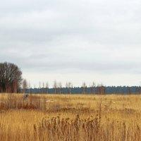 вело прогулка. :: Алексей Мамаев