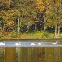 Лебеди на озере :: Маргарита Батырева