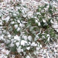 Запорошены снегом :: Елена Семигина