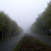 Туманная дорожка :: Alexander Varykhanov