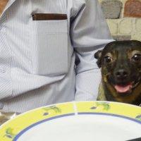 Я пришла. Почему не подают обед? :: татьяна
