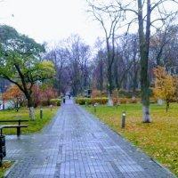 Островок осенних красок (Киев) :: Наталия Каминская