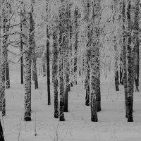 зимние зарисовки :: Горкун Ольга Николаевна