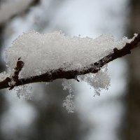 Первый снег. :: Елена Михайлова .