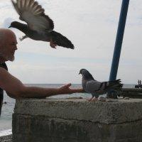 Атака ревнивого голубя:не приставай  к  моей подружке!.. :: Алекс Аро Аро