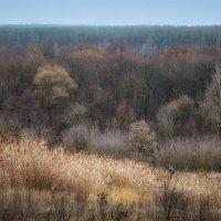 Осень...ноябрь :: Лидия Цапко
