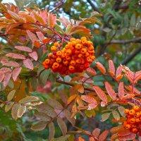 Осень в рыжем палантине. :: Elena Izotova