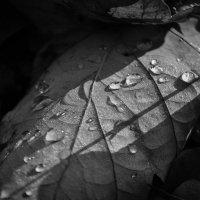 осень :: Inna Pervachenko