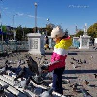 Птицы совершенно не боятся людей ... :: Anna Gornostayeva