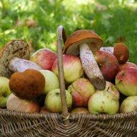 Корзинка с яблоками и грибами. :: Елена Kазак