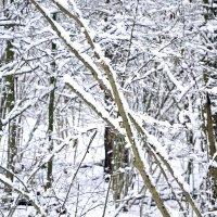 Снег в ноябре. :: Михаил Столяров