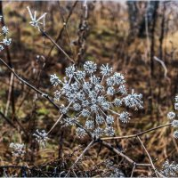 Кружева в природе :: Светлана Тремасова