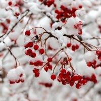 Первый снег :: Геннадий Беляков