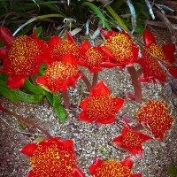 Кровавые цветы :: Mari_L