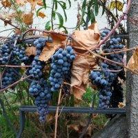 Осень :: Наталья (D.Nat@lia) Джикидзе (Берёзина)