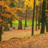 Скамейка в парке, ты сейчас одна... О чем ты думаешь? О чем сейчас мечтаешь? :: Юрий. Шмаков