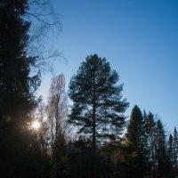 Осень :: Migeshka Mi