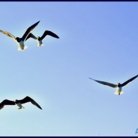 чайки :: Denis Lipatov