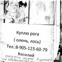 Рога :: Владимир *