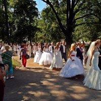 Парад невест. :: Виктор Егорович