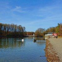 Ноябрь. На озере... :: Galina Dzubina