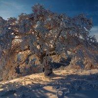 Про зимнюю сказку и белое безмолвие. :: Андрей Лепилин