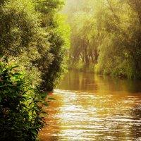 Утро на реке :: Alexander Andronik