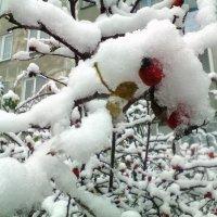 первый снег :: Maryana Petrova