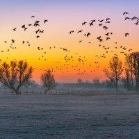 Утро и дикие гуси :: Игорь Геттингер (Igor Hettinger)