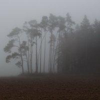 Осень туманная :: Waldemar F.