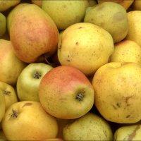 Сочные яблочки :: Нина Корешкова