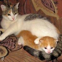 Мама кошка :: OLLES