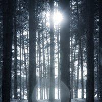Темный лес. :: Вадим Басов