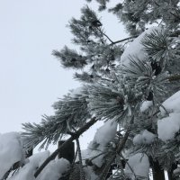 Зима :: Лето Теплое