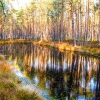 Последние осенние прелести. :: Александр Куканов (Лотошинский)
