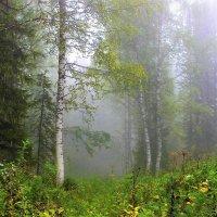 Лес наполнен туманом :: Сергей Чиняев