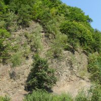 Карпатские   горы   в   Гошиве :: Андрей  Васильевич Коляскин