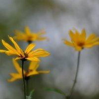 цветы осени... :: Natali-C C
