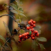 лесные истории... :: Natali-C C